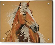 Acrylic Print featuring the pastel Haflinger  by Melita Safran