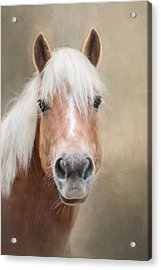 Acrylic Print featuring the photograph Haflinger by Robin-Lee Vieira
