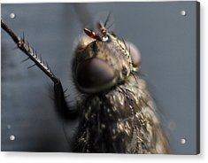 Acrylic Print featuring the photograph Hair On A Fly by Glenn Gordon
