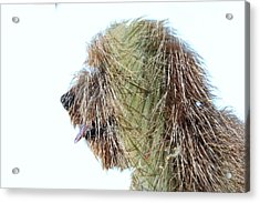 Hairy Doodle Acrylic Print