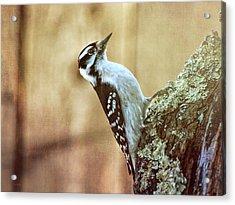 Hairy Woodpecker Acrylic Print by Bob Orsillo
