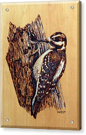 Hairy Woodpecker Acrylic Print by Ron Haist
