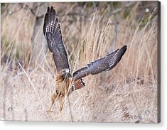 Hal Picking Up Dinner Acrylic Print