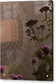 Half A Web Acrylic Print