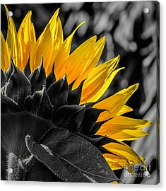 Half And Half Acrylic Print by Lisa Plymell