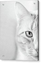 Half Cat Acrylic Print
