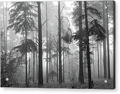 Half Century Acrylic Print by Mary Amerman