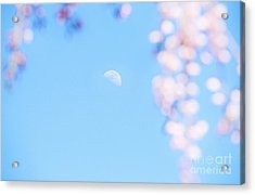 Half Moon And Weeping Cherry Blossoms Acrylic Print by Charline Xia