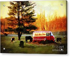 Half Moon Farm Cows Acrylic Print by Janine Riley