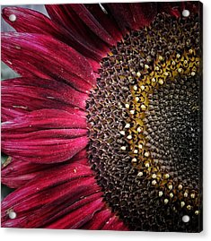 Half Red Acrylic Print by Karen Stahlros