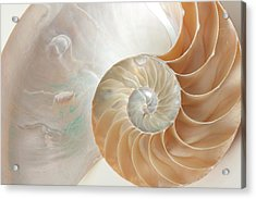 Acrylic Print featuring the photograph Half  Shell Nautilus by John Hix