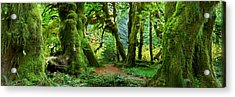 Hall Of Mosses - Craigbill.com - Open Edition Acrylic Print by Craig Bill
