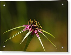 Acrylic Print featuring the photograph Hallelujah by Richard Patmore
