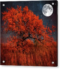 Halloween Color Acrylic Print by Philippe Sainte-Laudy Photography