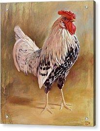 Hamburg Rooster Acrylic Print