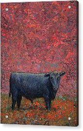 Hamburger Sky Acrylic Print by James W Johnson