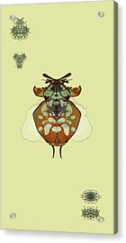 Hammerhead Ladybug Specimen Acrylic Print