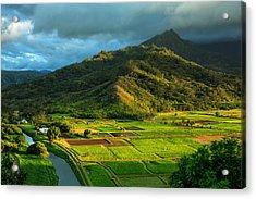 Hanalei Valley Taro Fields Acrylic Print
