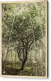 Hand Of God Apple Tree Poster Acrylic Print