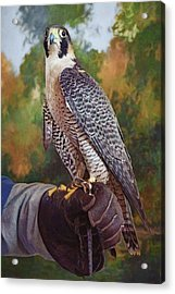 Acrylic Print featuring the photograph Hand Of The Falconer by Nikolyn McDonald