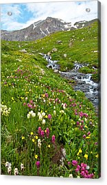 Acrylic Print featuring the photograph Handie's Peak And Alpine Meadow by Cascade Colors