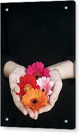Hands Holding Colorful Gerbera Daisies  Acrylic Print