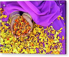 Hands Holding Marigold Petals Acrylic Print by Tim Gainey