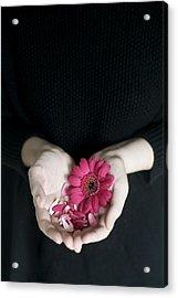 Hands Holding Pink Gerbera Daisies Acrylic Print