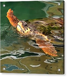 Hands Up For A Plastic Free Ocean Loggerhead Turtle Acrylic Print