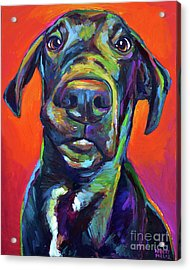 Handsome Hank Acrylic Print