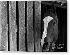 Handsome T Acrylic Print