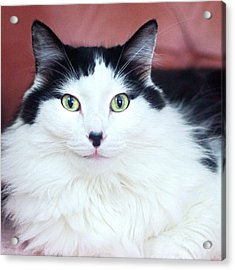 Acrylic Print featuring the photograph Handsome Tuxy by Byron Varvarigos