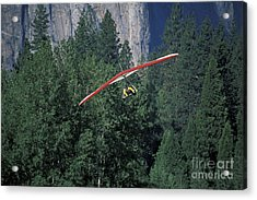 Acrylic Print featuring the photograph Hang Glider In Yosemite by Stan and Anne Foster