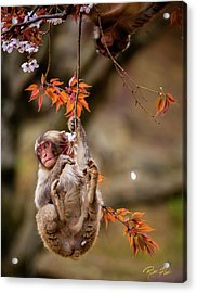 Acrylic Print featuring the photograph Hang In There, Baby Redux by Rikk Flohr