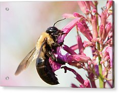 Acrylic Print featuring the photograph Hang In There by Brian Hale