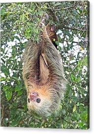 Hangin In Costa Rica Acrylic Print