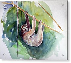 Hangin' In There Acrylic Print