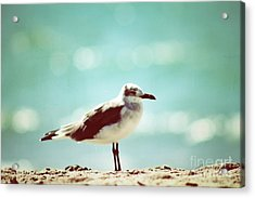 Hanging Around Acrylic Print by Gina Cormier