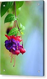 Hanging Gardens Fuschia Acrylic Print by Laura Mountainspring