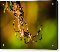 Hanging On A Thread Acrylic Print