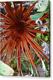 Hanging Onto Beauty Acrylic Print by Elizabeth Hoskinson