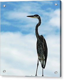 Hanging Out Acrylic Print by Diane Luke