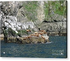 Hanging Out In Alaska Acrylic Print