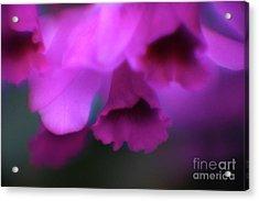 Hanging Purple Tropical Flowers Up Close- Kauai- Hawaii Acrylic Print