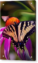Happiness In Our Own Gardens... Acrylic Print