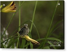 Happy And Content 13 Acrylic Print by E Mac MacKay