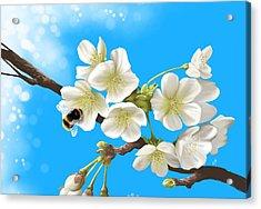 Happy Bee Acrylic Print by Veronica Minozzi
