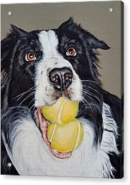 Happy Border Collie Acrylic Print by Pamela Post