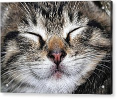 Happy Cat Acrylic Print by JAMART Photography