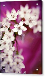 Acrylic Print featuring the photograph Happy by Christi Kraft